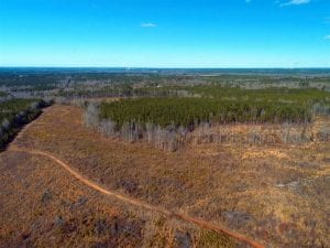UNDER CONTRACT!  50 Acres of Hunting and Timber Land For Sale in Lee County NC!