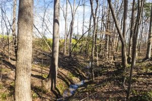 15 Acres + / –  of Timber and Residential Land For Sale in Franklin County NC!