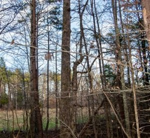 20 acres of Hunting and Recreational Land For Sale in Halifax County VA!