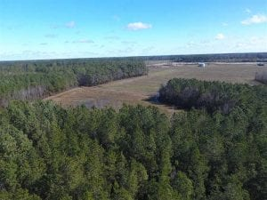UNDER CONTRACT!!  19.75 acres of Hunting and Timberland for Sale in Columbus County NC!