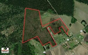 45 Acres of Hunting and Recreational Land For Sale in Edgecombe County NC!