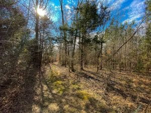 36 acres of Investment and Recreational Land for Sale in Rockingham County!