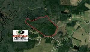 SOLD!!  71 +/ - acres of Hunting Land For Sale in Brunswick County NC!