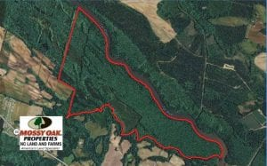 SOLD!!  660 Acres of Hunting and Timber Land For Sale in Pitt County NC!