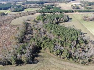 SOLD!!  24 acres of Hunting and Timberland For Sale in Robeson County NC!
