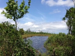 UNDER CONTRACT!!  441 acres of  Waterfront Hunting Land for Sale in Camden County NC!