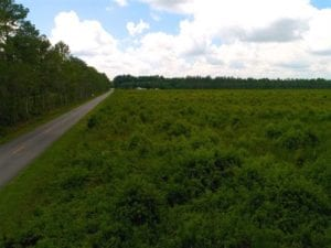 SOLD!!  53.86 Acres of Timber and Hunting Land in Tyrrell County NC!