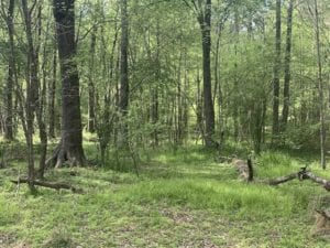 8.59 Acres of Hunting and Creek Front Land For Sale in Nash County NC!