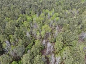 REDUCED!! 13.71 Acres of Timber and Hunting Land For Sale in Greene County, NC!