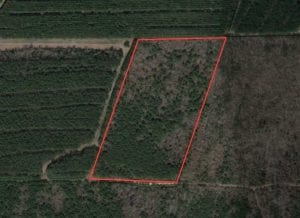 13.71 Acres of Timber and Hunting Land For Sale in Greene County, NC!
