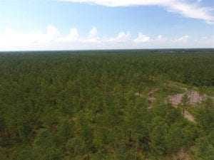 265 Acres of Timber and Hunting Land For Sale in Duplin County NC!