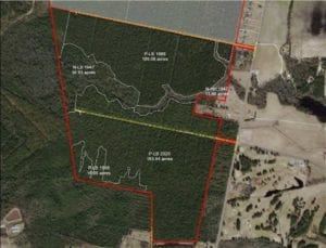 348 Acres of Timber and Hunting Land For Sale in Duplin County NC!