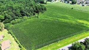 SOLD!!  18.7 Acres of Farm and Timber Land For Sale In Pitt County NC!