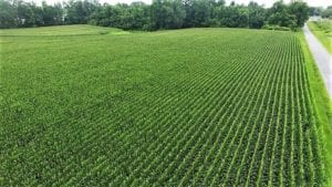 SOLD!!  17.1 Acres of Farm and Timber Land For Sale In Pitt County NC!
