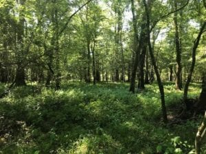 UNDER CONTRACT!! 265 Acres of Prime Hunting Land For Sale in Sampson County NC!