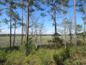 REDUCED! 0.46 Acre Residential Lot For Sale in Brunswick County NC!