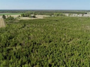 REDUCED! 218 Acres of Hunting and Timber Land For Sale in Gates County NC!