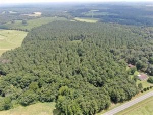 REDUCED!! 53 Acres of Development and Timber Land For Sale in Chatham County, NC!