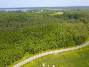 REDUCED! 97 Acres of Farm and Timber Land For sale in Tyrrell County NC!