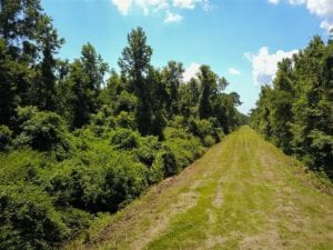 364 Acres of Hunting Land For Sale in Hyde County NC!