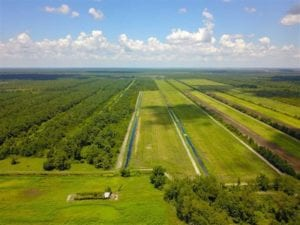 844 Acres of Hunting Land For Sale in Hyde County NC!