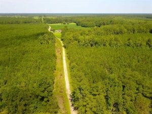 72 Acres of Timber and Hunting Land For Sale in Bertie County NC!