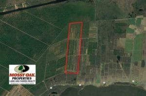 564 Acres of Hunting Land For Sale in Hyde County NC!