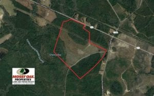 233 Acres of Timber and Hunting Land For Sale in Bladen County NC!