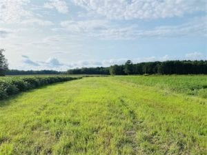 REDUCED! 177 Acres of Farm and Hunting Land For Sale in Nash County NC!