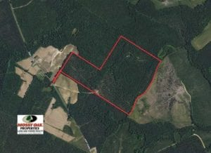 REDUCED!! 144 Acres of Hunting Land For Sale in Halifax County NC!