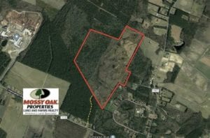 REDUCED!! 166 acres of Timberland For Sale in Pitt County NC!