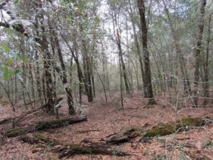 UNDER CONTRACT!! 215.19 acres of Hunting and Timberland for Sale in Bladen County NC!