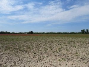 REDUCED!! 8.42 Acres of Residential and Farm Land For Sale in Robeson County NC!