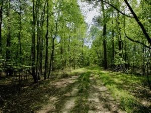 102 acres Hunting and Timber Land for Sale in Beaufort County NC!