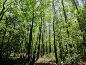 22 ac Residential Land for Sale in Chowan County NC!