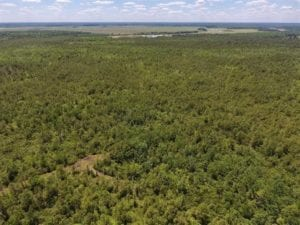 REDUCED!! 656 Acres of Hunting, Investment, and Timber Land For Sale In Bladen County, NC!