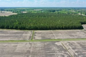 36 acre Homesite for Sale in Craven County NC!