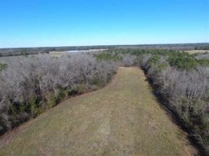 40 acres of Hunting and Timberland for Sale in Robeson County NC!