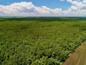 252 Acres of Hunting and Timber Land for sale in Hyde County, NC!