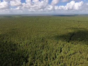 60 Acres of Hunting Land For Sale in Hyde County NC!