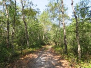 230 Acres of Hunting Land For Sale in Brunswick County NC!