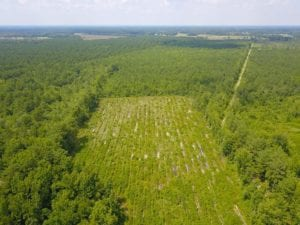 378 Acres of Timber and Hunting Land For Sale in Wilson County NC!