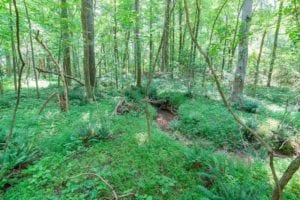 REDUCED!! 14.35 Acres of Residential and Recreational Land For Sale in Alamance County, NC!