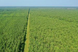 89 acres of Timberland for Sale in Bertie County NC!
