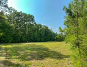 46.50 acres of Prime Hunting Land with Cabin for Sale in Caswell County!