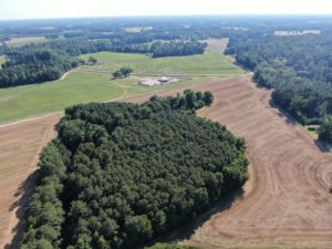 41 acres of Hunting and Farmland For Sale in Robeson County, NC!