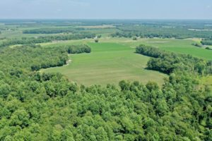 56.79 acre Farm and Timberland for Sale in Chowan County NC!