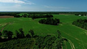 33 Acres of Farm and Timber Land For Sale in Robeson County NC!