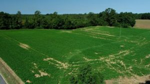 14 Acres of Farm and Timber Land For Sale in Robeson County NC!