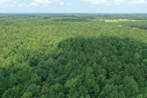 58 acre Hunting and Timberland for Sale in Halifax County NC!